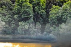 Sonnenuntergang-Wald Lizenzfreie Stockbilder