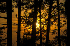Sonnenuntergang-Wald Stockfoto