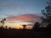 Sonnenuntergang-Wald Lizenzfreies Stockfoto