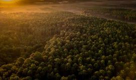 Sonnenuntergang, Wald von der Düne du Pilat, Arcachon-Becken lizenzfreies stockbild