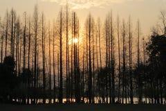 Sonnenuntergang in Westsee von Hangzhou, China Lizenzfreie Stockbilder