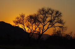 Sonnenuntergang in wildem Afrika stockfotos