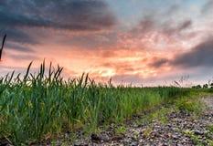 Sonnenuntergang, Wolken und Ernte Lizenzfreie Stockfotografie