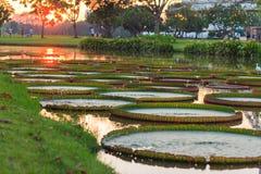 Sonnenuntergang-Zeit in Bangkok Stockbilder