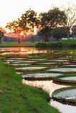 Sonnenuntergang-Zeit in Bangkok Lizenzfreie Stockfotografie