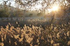 Sonnenuntergang zwischen Anlagen lizenzfreie stockfotografie