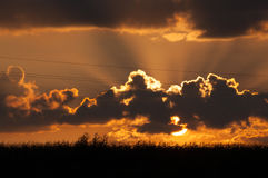 Sonnenuntergangansicht über ein Maisfeld Lizenzfreie Stockfotos