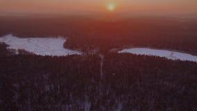 Sonnenuntergangansicht über Wald stock footage