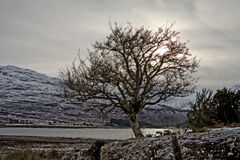 Sonnenuntergangansicht eines Baums bei Schottland Lizenzfreie Stockfotos