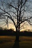 Sonnenuntergangbäume Stockfotografie