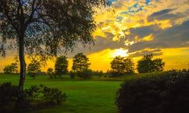 Sonnenuntergangbäume lizenzfreies stockbild