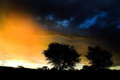 Sonnenuntergangbaum stockbild