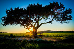 Sonnenuntergangbaum Lizenzfreies Stockbild
