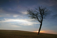 Sonnenuntergangbaumschattenbild Lizenzfreie Stockbilder