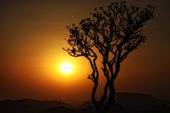 Sonnenuntergangbaumschattenbild Lizenzfreie Stockfotos