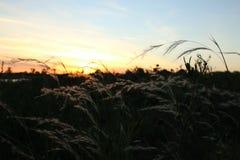 Sonnenuntergangblätter lizenzfreie stockfotos