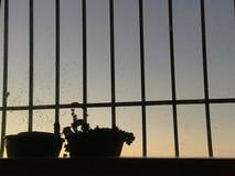 Sonnenuntergangblume 1/24/2018 Stockbilder