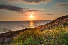 Sonnenuntergangblumenwiesen- und -ozeanfrühlingsfarben Lizenzfreies Stockfoto
