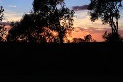 Sonnenuntergangende der großen Bäume der Tageswolken stockfoto