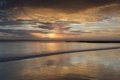 Sonnenuntergangfarben und ruhiger Wasser Kohl-Baum setzen auf den Strand stockfotos