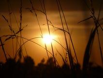 Sonnenuntergangfeld Stockfoto