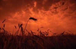 Sonnenuntergangfeld Lizenzfreies Stockbild