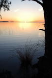 Sonnenuntergangfelder mit Kiefern Stockfotografie