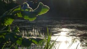 Sonnenuntergangfluß lizenzfreies stockbild