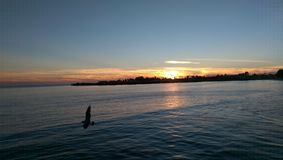 Sonnenuntergangflug Lizenzfreies Stockbild