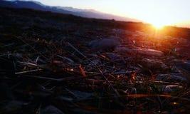 Sonnenuntergangfrühling Stockfotos
