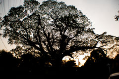 Sonnenunterganghimmel durch den Baum Stockbild