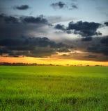 Sonnenunterganghimmel und -wiese Stockfoto