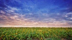 Sonnenunterganghimmel-Wolkenfeld Lizenzfreie Stockbilder