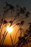 Sonnenunterganghintergrund Lizenzfreie Stockfotos