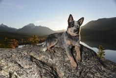 Sonnenunterganghund Lizenzfreie Stockbilder