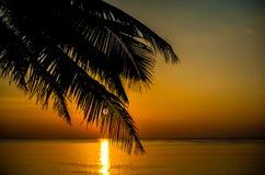 Sonnenuntergangkokosnussbaum Lizenzfreie Stockfotos