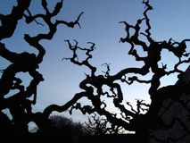 Sonnenuntergangkreuz der Baum Lizenzfreie Stockfotografie