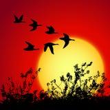 Sonnenunterganglandschaft Stockfotos