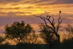 Sonnenunterganglandschaft in Nationalpark Kruger lizenzfreie stockbilder
