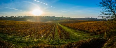 Sonnenunterganglandschaft und -smog in Bordeaux wineyard Frankreich, Europa stockfotos