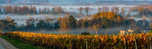 Sonnenunterganglandschaft und -smog in Bordeaux wineyard Frankreich, Europa lizenzfreie stockbilder