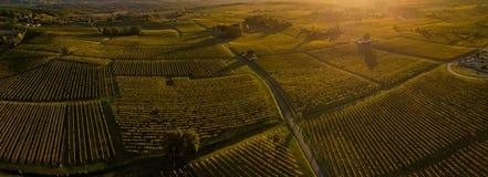 Sonnenunterganglandschaft und -smog in Bordeaux wineyard Frankreich, Europa lizenzfreie stockfotografie