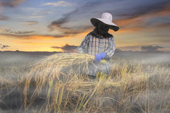 Sonnenunterganglandwirt stockfotos