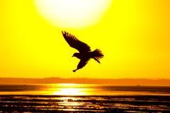 Sonnenuntergangmöve lizenzfreies stockfoto