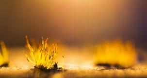 Sonnenuntergangmooslicht lizenzfreies stockbild
