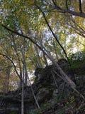 Sonnenuntergangsbäume stockfotos