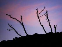 Sonnenuntergangschattenbild mit rosa purpurrotem Himmel stockfotografie