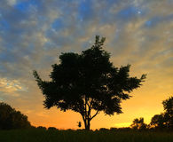 Sonnenuntergangschwingen Lizenzfreies Stockfoto