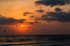 Sonnenuntergangsommersonne auf der Seeküste stockfotos