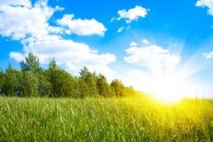 Sonnenuntergangsonne und Feld des grünen frischen Grases Stockbild